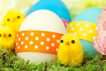 Chicks -and -easter -eggs